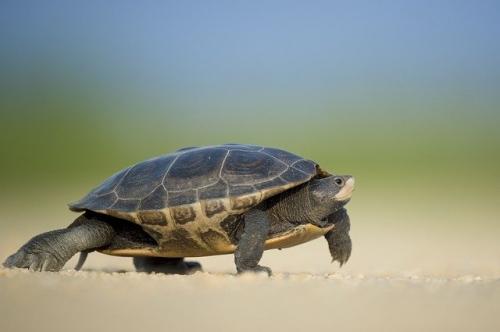 turtle 1850190 640